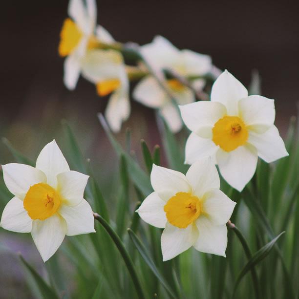 Spring Detox - Vitality Natural Medicine